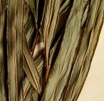 Lindsaea ensifolia