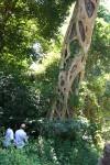 Ficus bubu