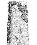 Brachystegia glaucescens