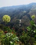 Diplolophium buchananii subsp. buchananii