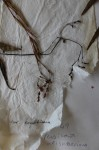 Persicaria meisneriana var. beyrichiana