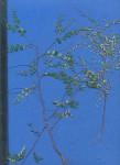 Phyllanthus nummulariifolius var. nummulariifolius