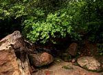 Croton menyharthii