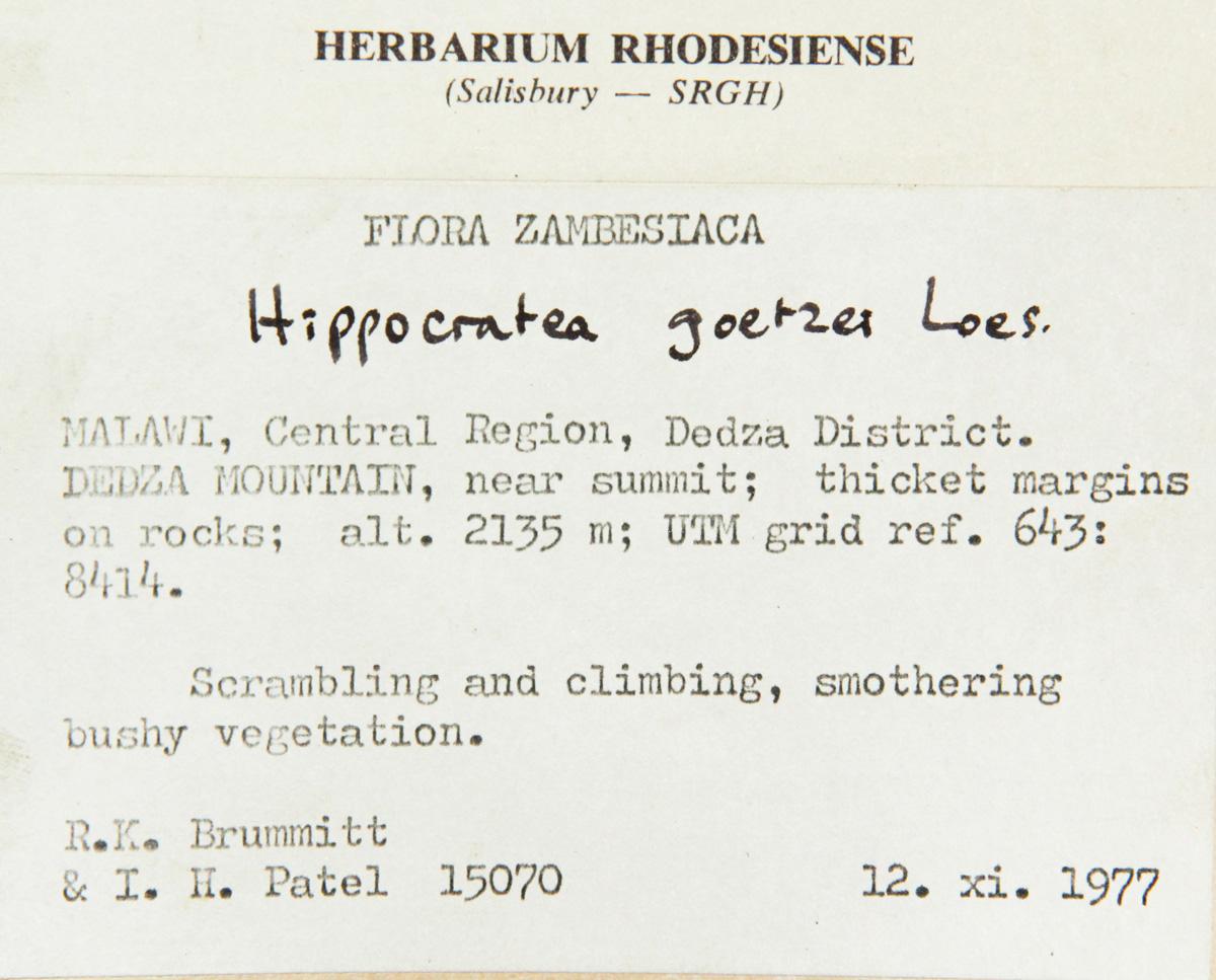 Hippocratea goetzei