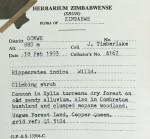 Hippocratea indica