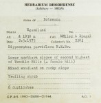Hippocratea parviflora