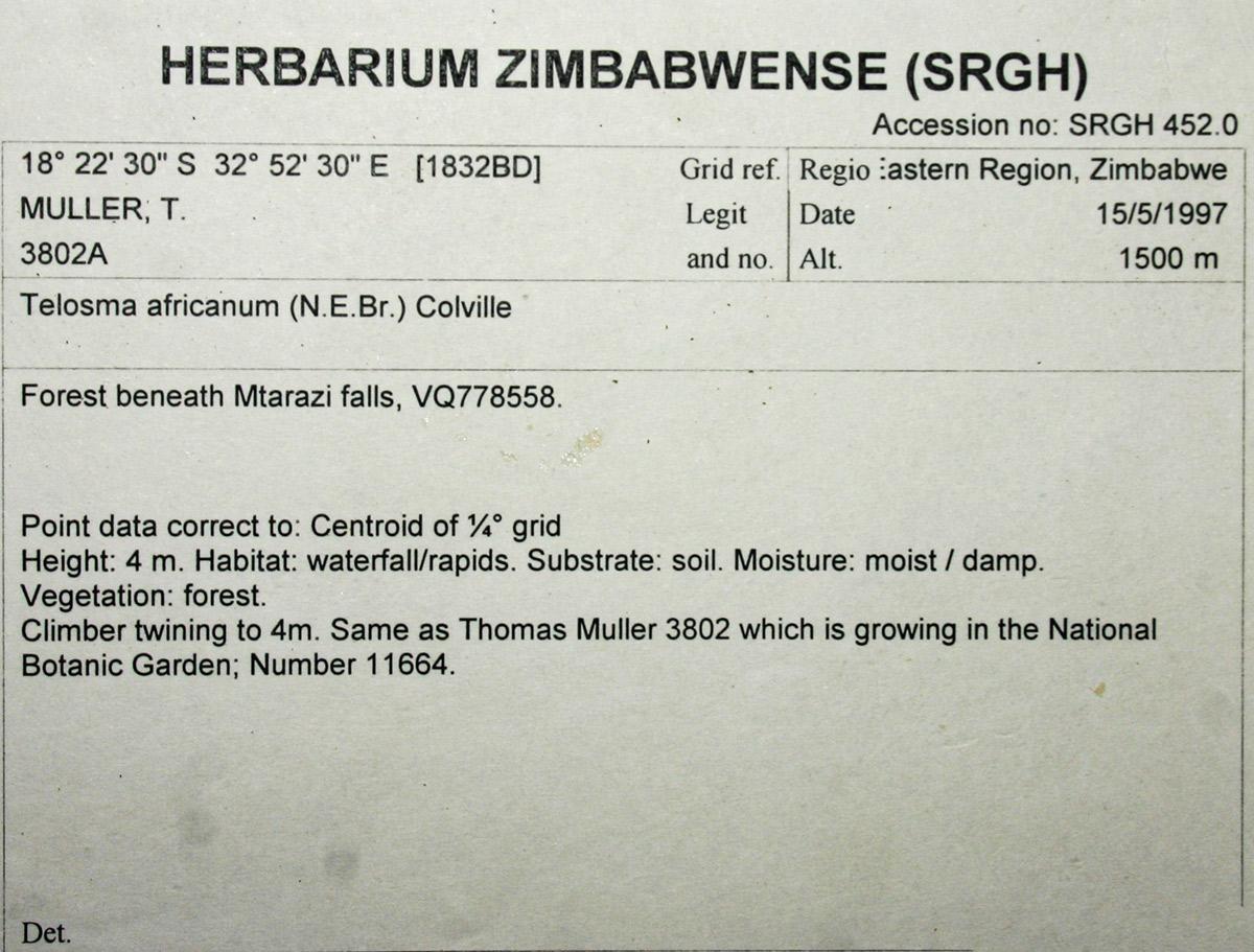Telosma africana