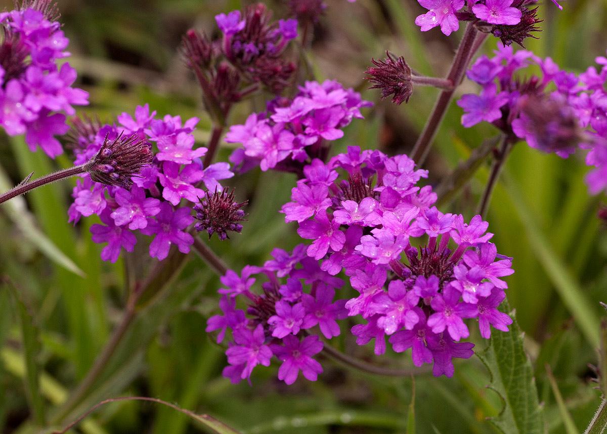 Цветы многолетние разновидность и 32