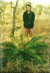 Encephalartos schmitzii