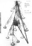 Vernonia perrottetii