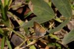 Deudorix dinochares