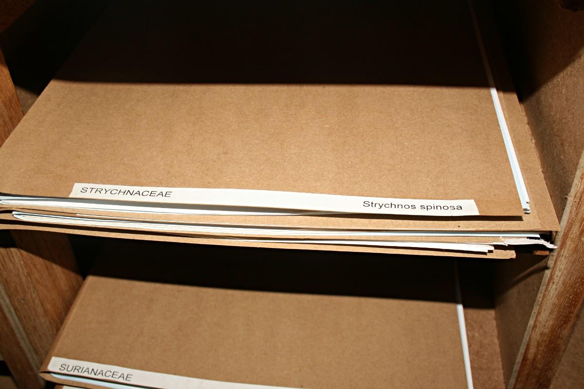 Folders containing specimens
