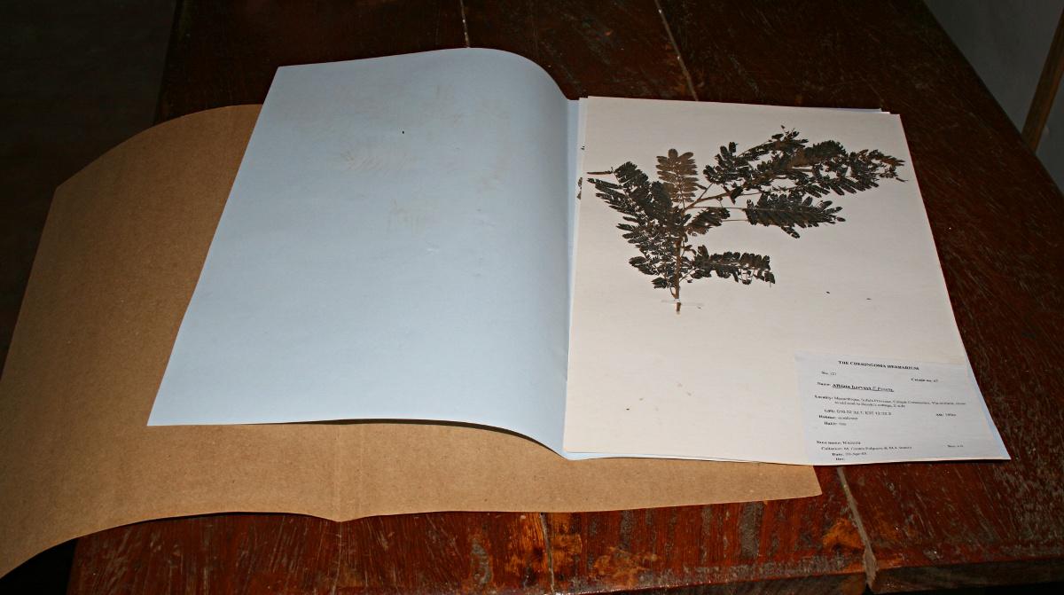 Sample herbarium sheet