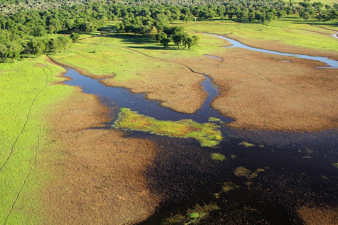 Typical floodplain vegetation flanked by forests of Faidherbia albida, Vachellia xanthophloea and Hyphaene palms.  and