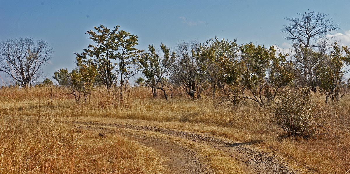 Wooded grassland, Livingstone Guest Farm