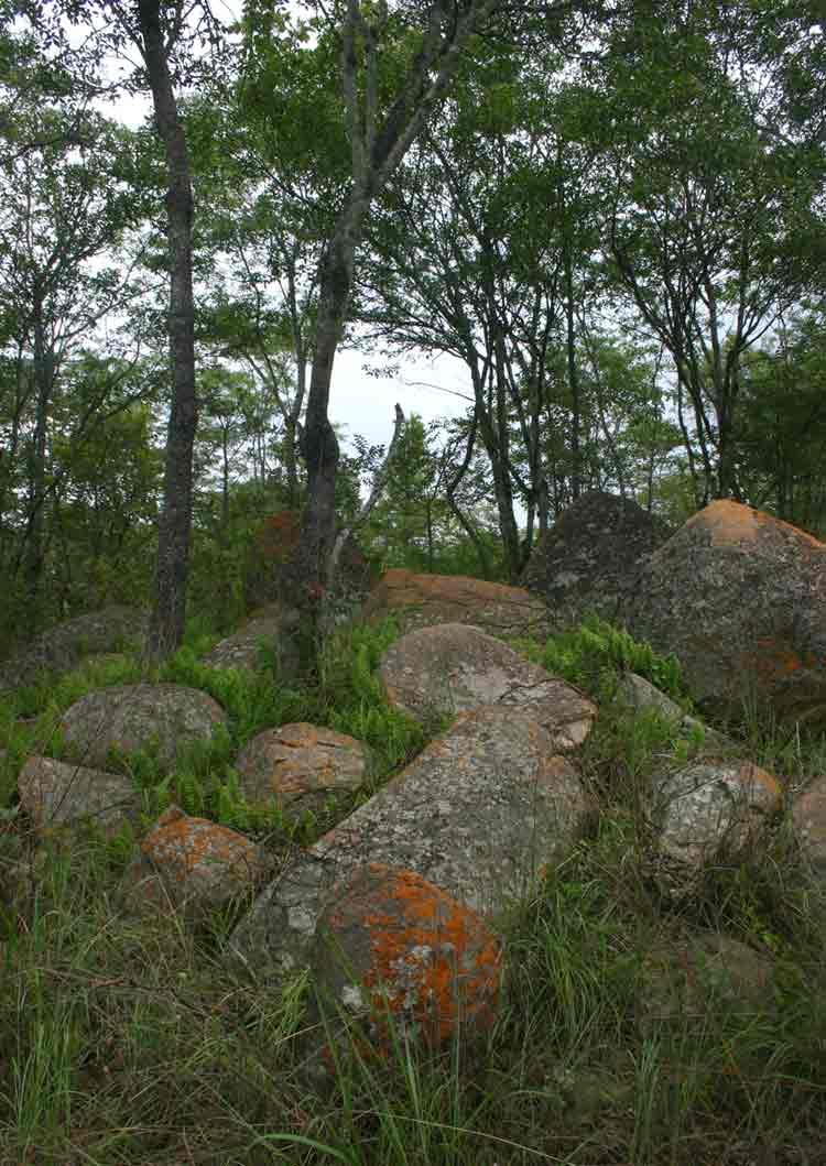 Miombo woodland in a rocky habitat