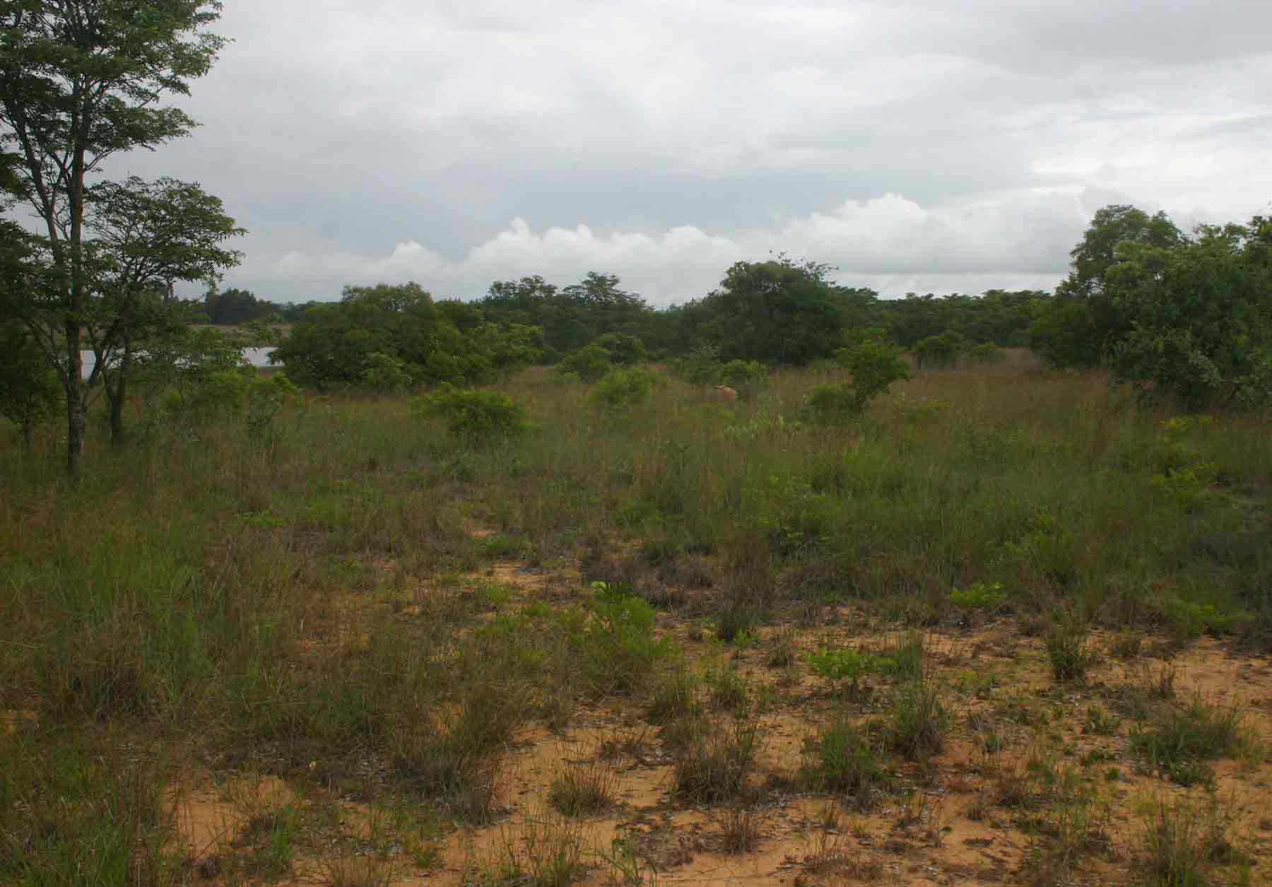 Open area, partly poor sandy soils and partly grassy vleis