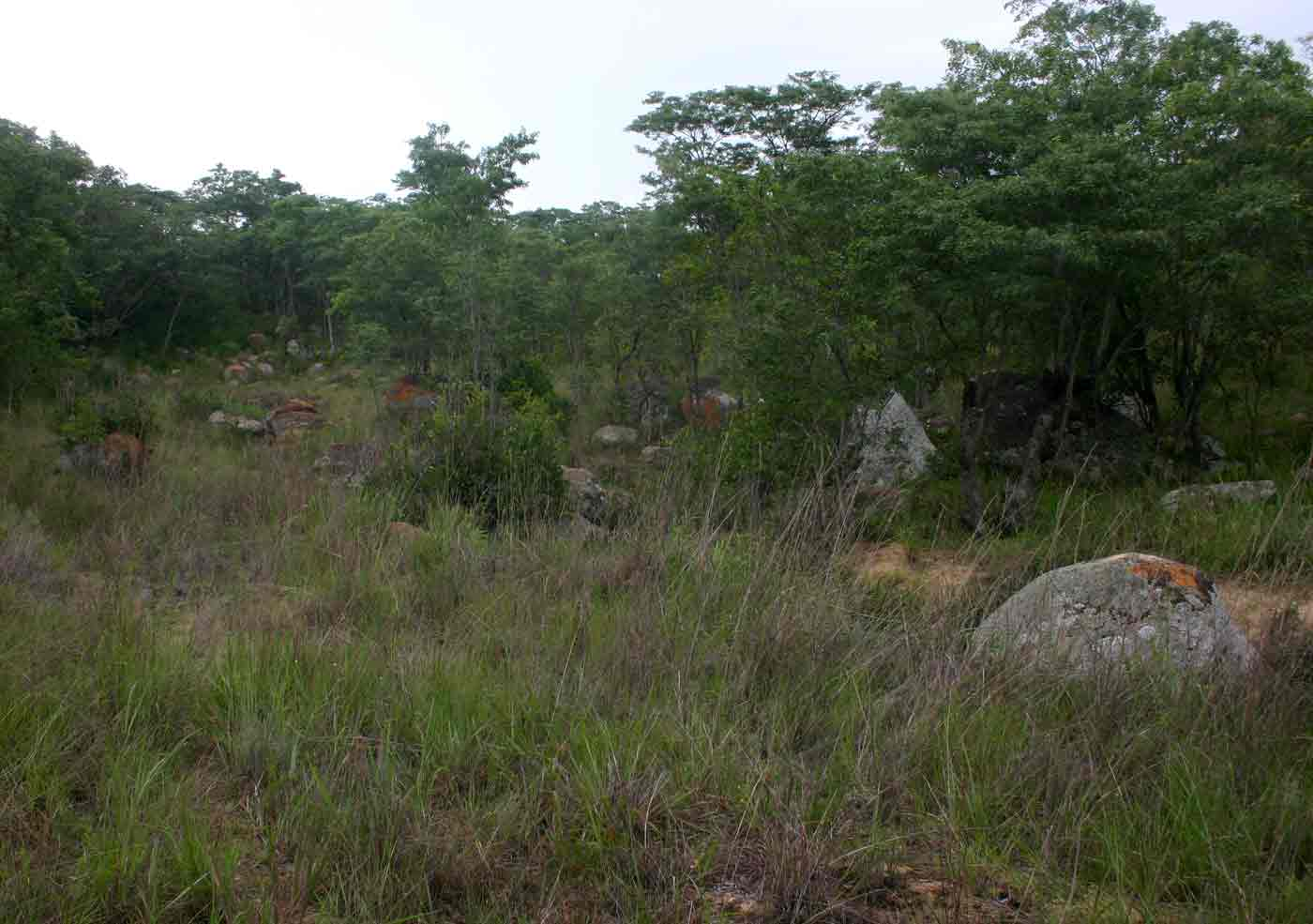Grassland and miombo woodland