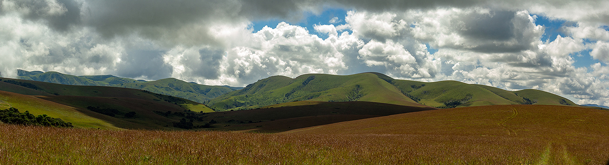 View to Nganda Hill with typical montane Nyika landscape of rolling grasslands with small patches of evergreen forest.