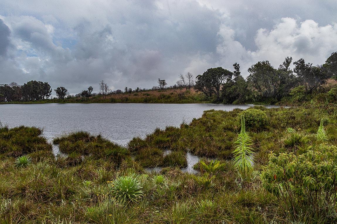 Lake Kaulime with Lobelia mildbraedii growing in the montane bogs.
