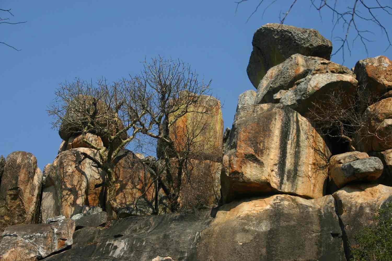 Trees on a rocky kopje.