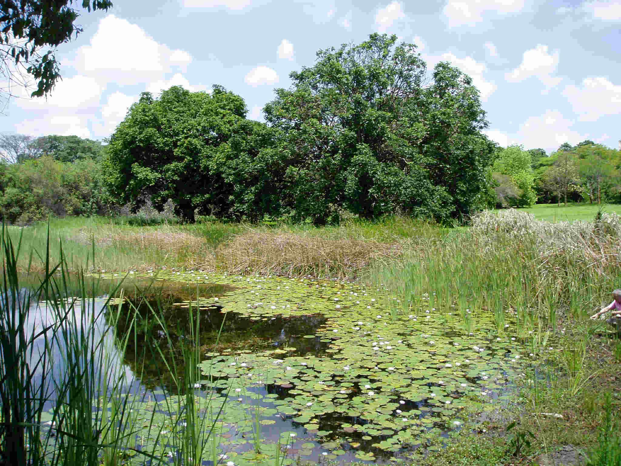 National Botanic Garden Zimbabwe