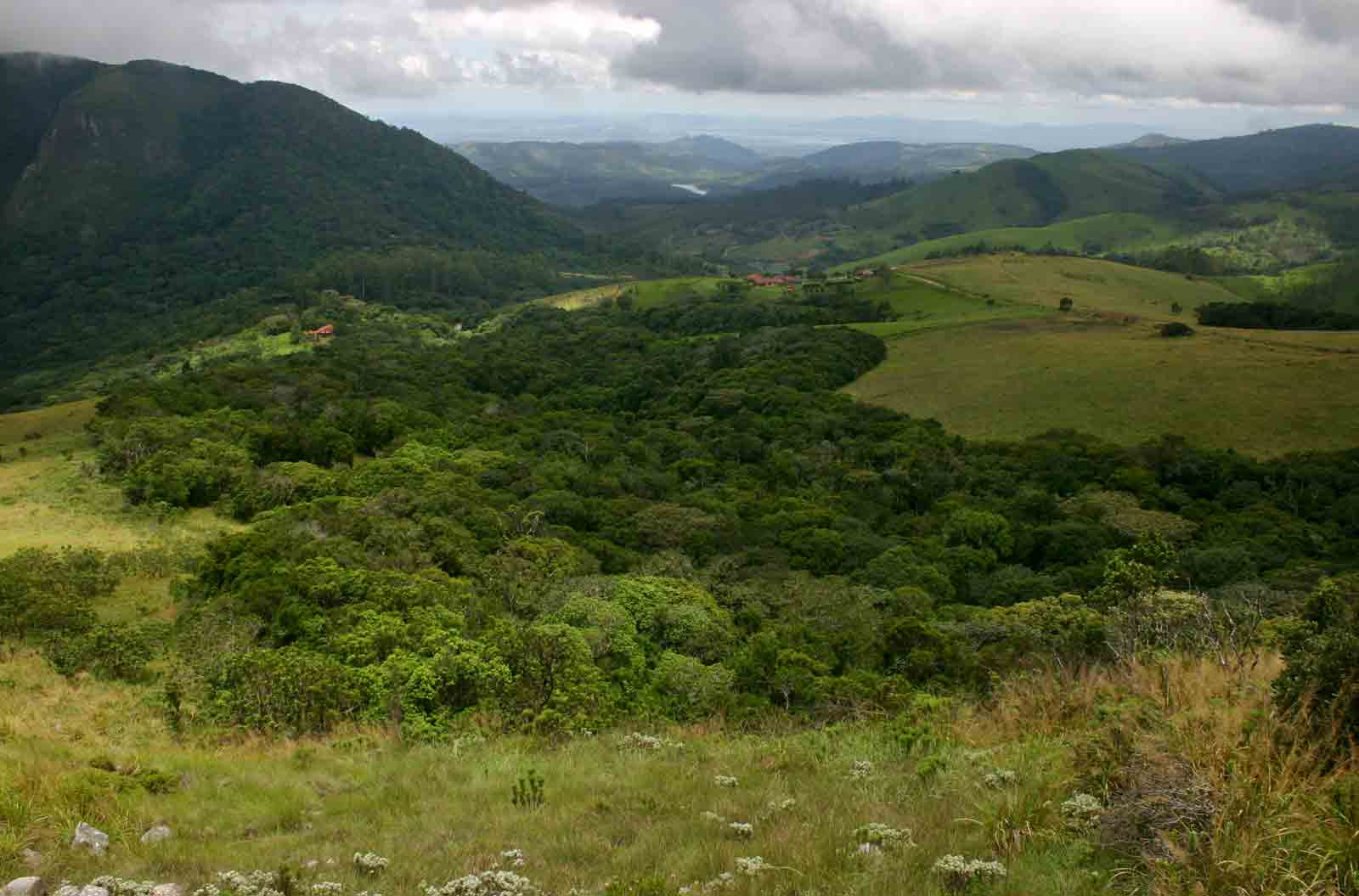 View of the Cloudlands' Forest taken from the summit of Chinziwa.