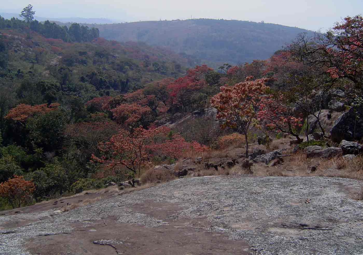 """<a href=""""species.php?species_id=126660"""">Brachystegia spiciformis</a> with evergreen forest in the ravines"""