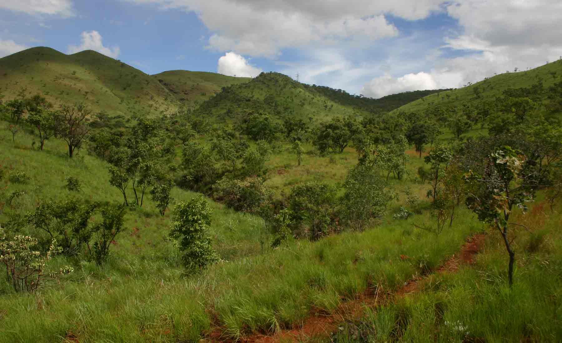 View of serpentine grassland of Gt Dyke