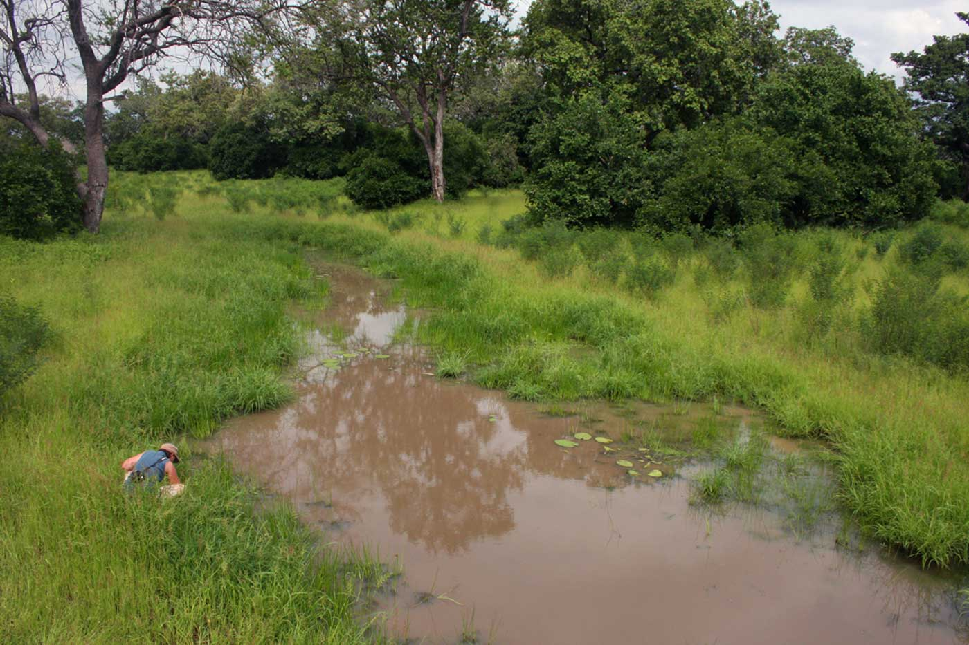 One of Mana's many pools during the rainy season with Petra looking for Marsilea minuta, one of its very few fern species