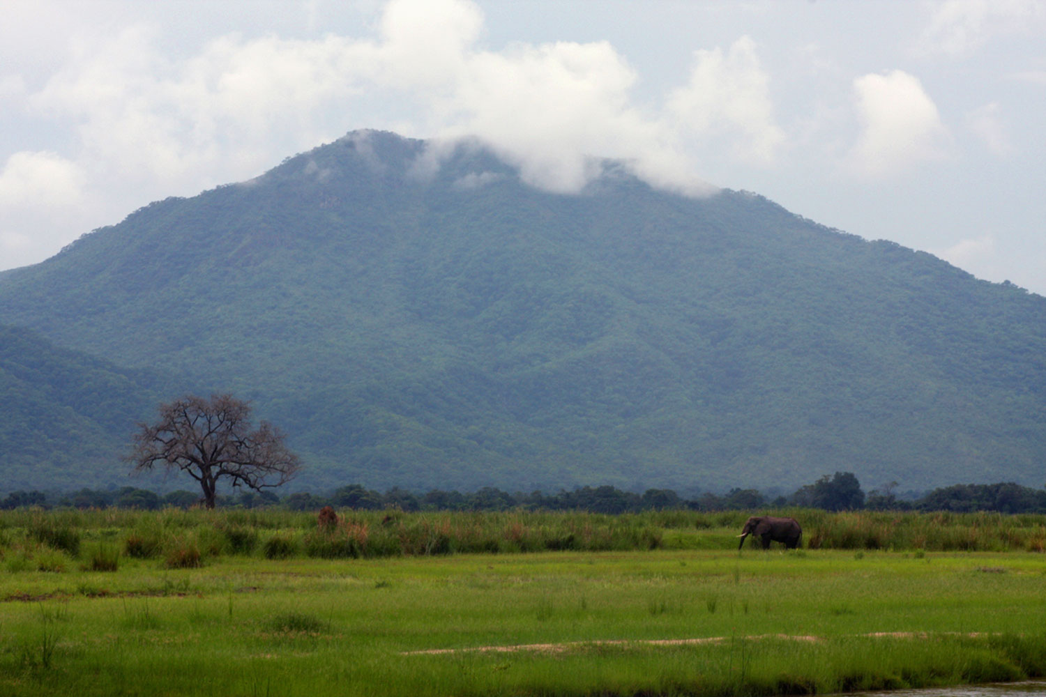 One of the many grassy islands with the Zambian escarpment in the background