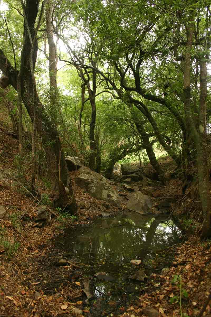 Riverine fringes along a Mazowe tributary