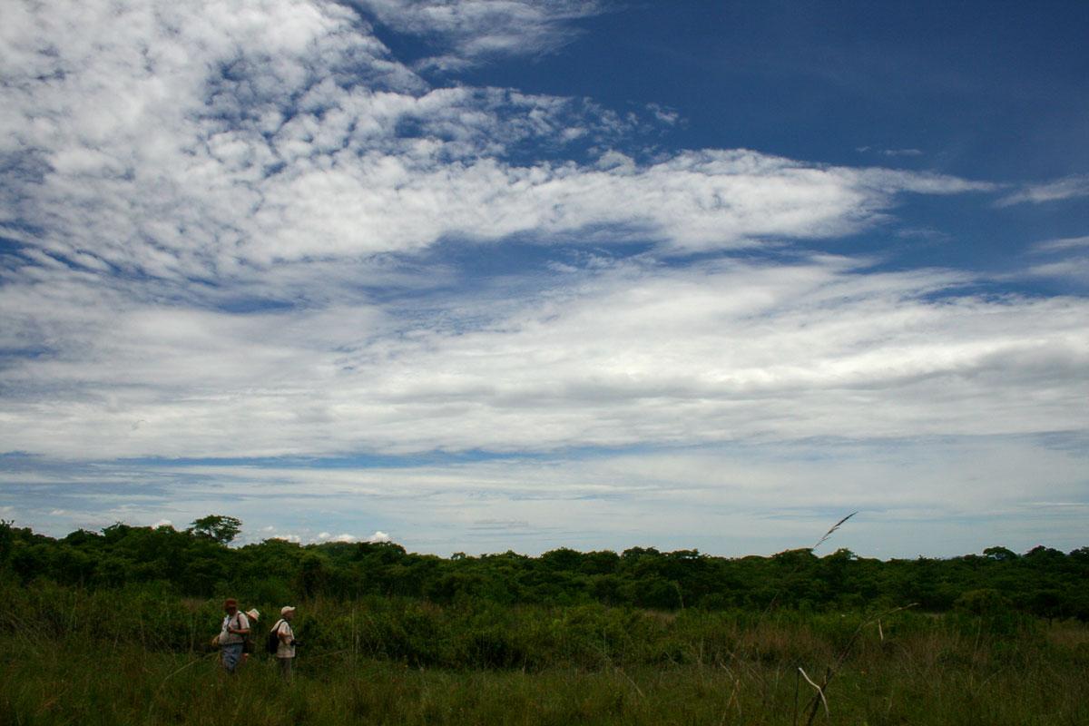 Zimbabwe Flora Team a work in the grasslands.