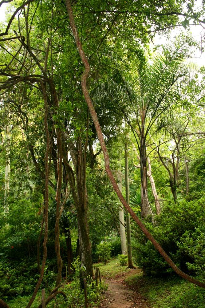 Path through the forest-like part of La Rochelle Botanic Garden