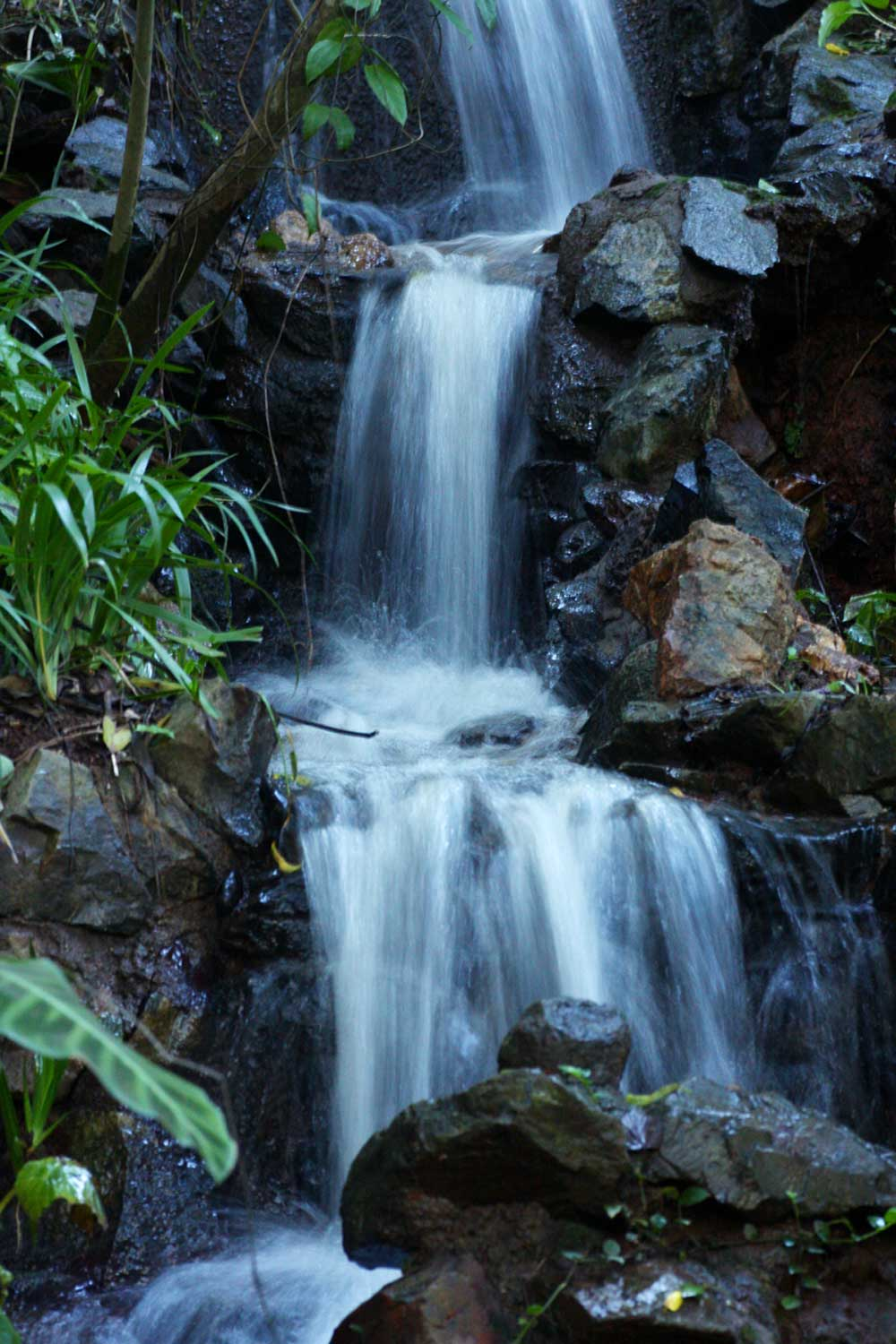 Small waterfall in the forest part of La Rochelle Botanic Garden