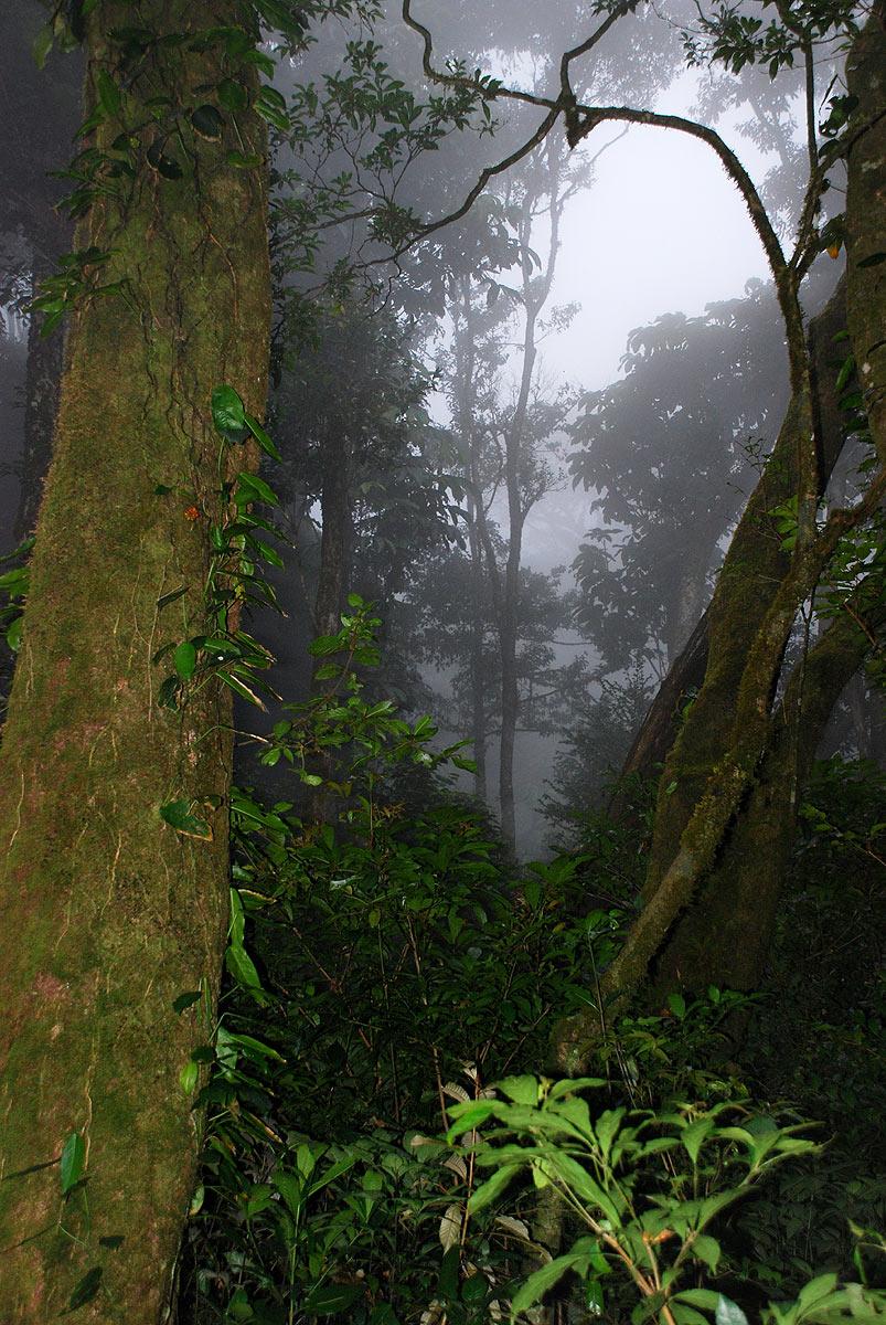 Dark misty forests still cover the higher slopes.