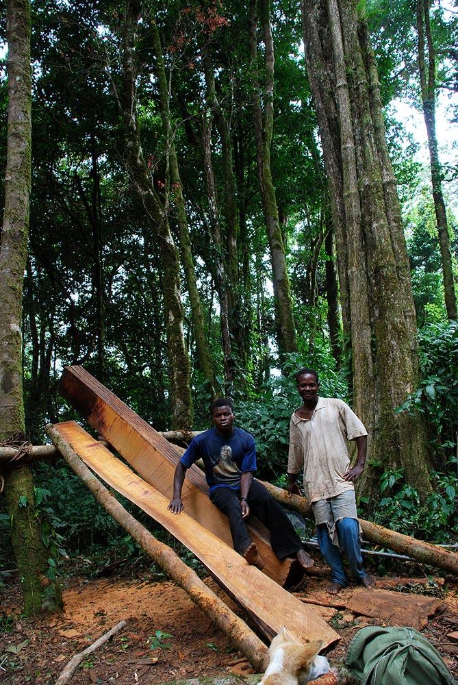Artisanal logging in the montane forests below Namuli Peak.