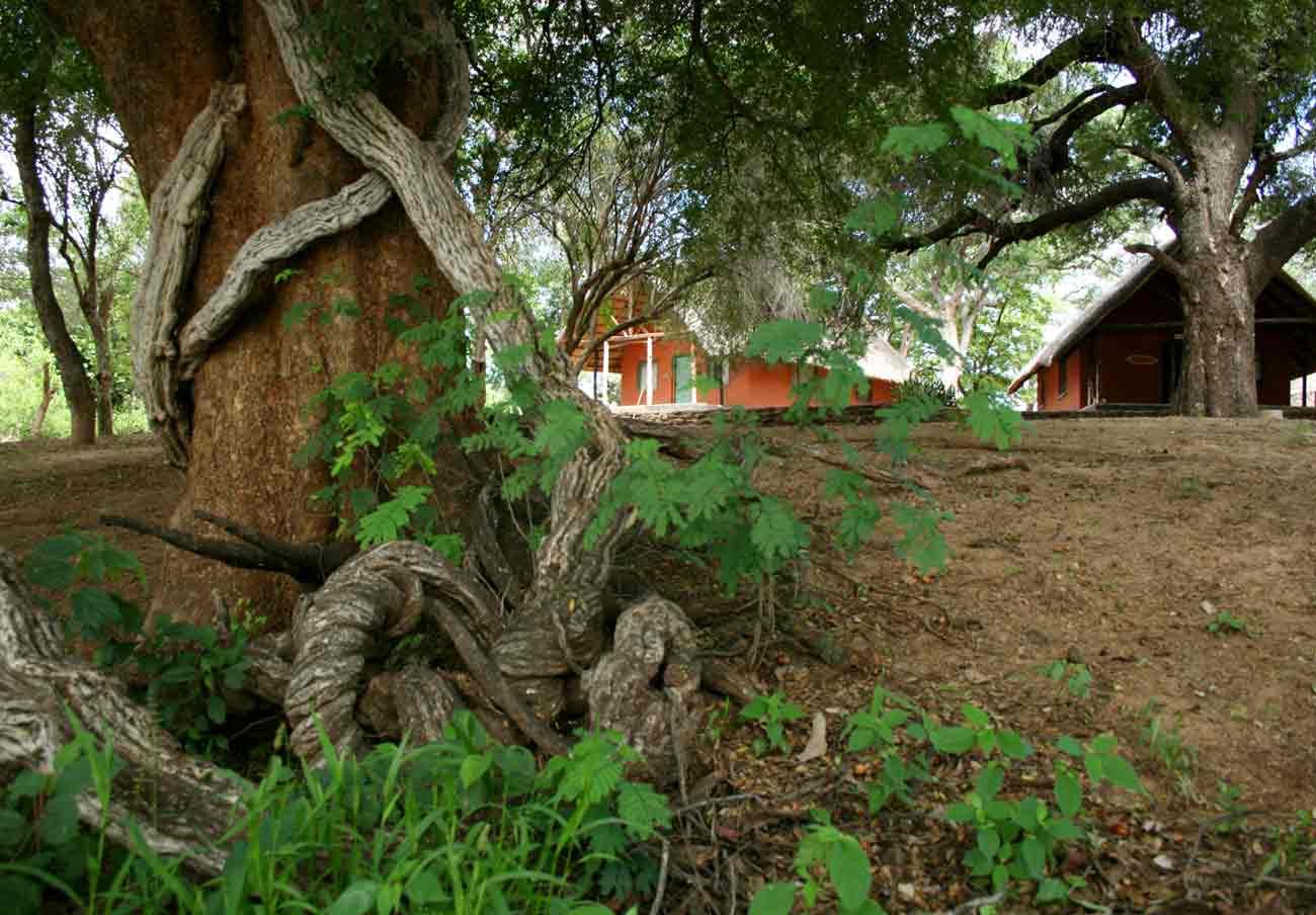 The WEZ cottages under riverine trees.