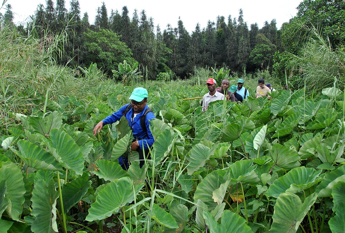Trekking to the swamp towards the Pandanus forest
