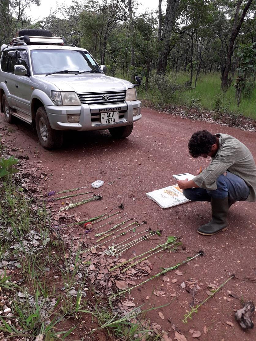 Nick making specimen notes near Chimfunsi. Habitat: Miombo woodland. Location: Chimfunsi, Chingola District, Copperbelt Province.