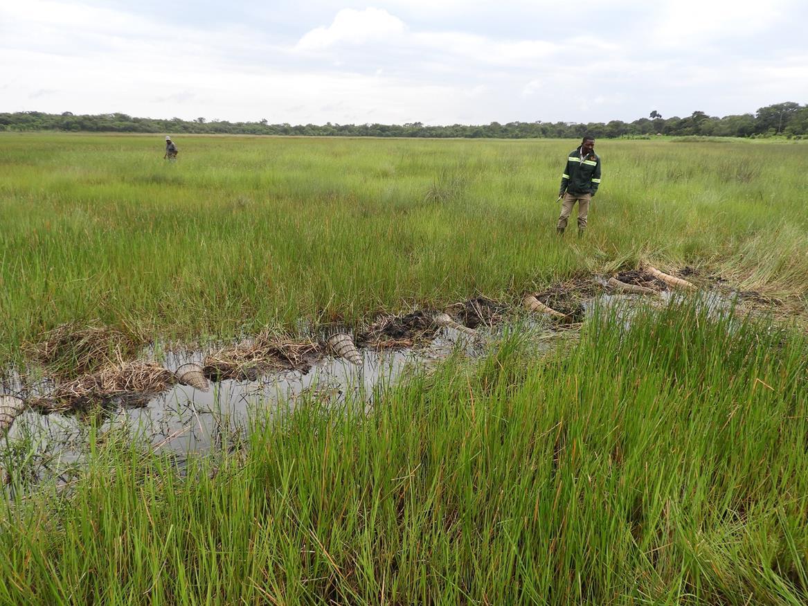 Nyikongola Dambo. Habitat: perennial wet dambo. Location: Chimwishi area, Mwinilunga District, North-Western Province.