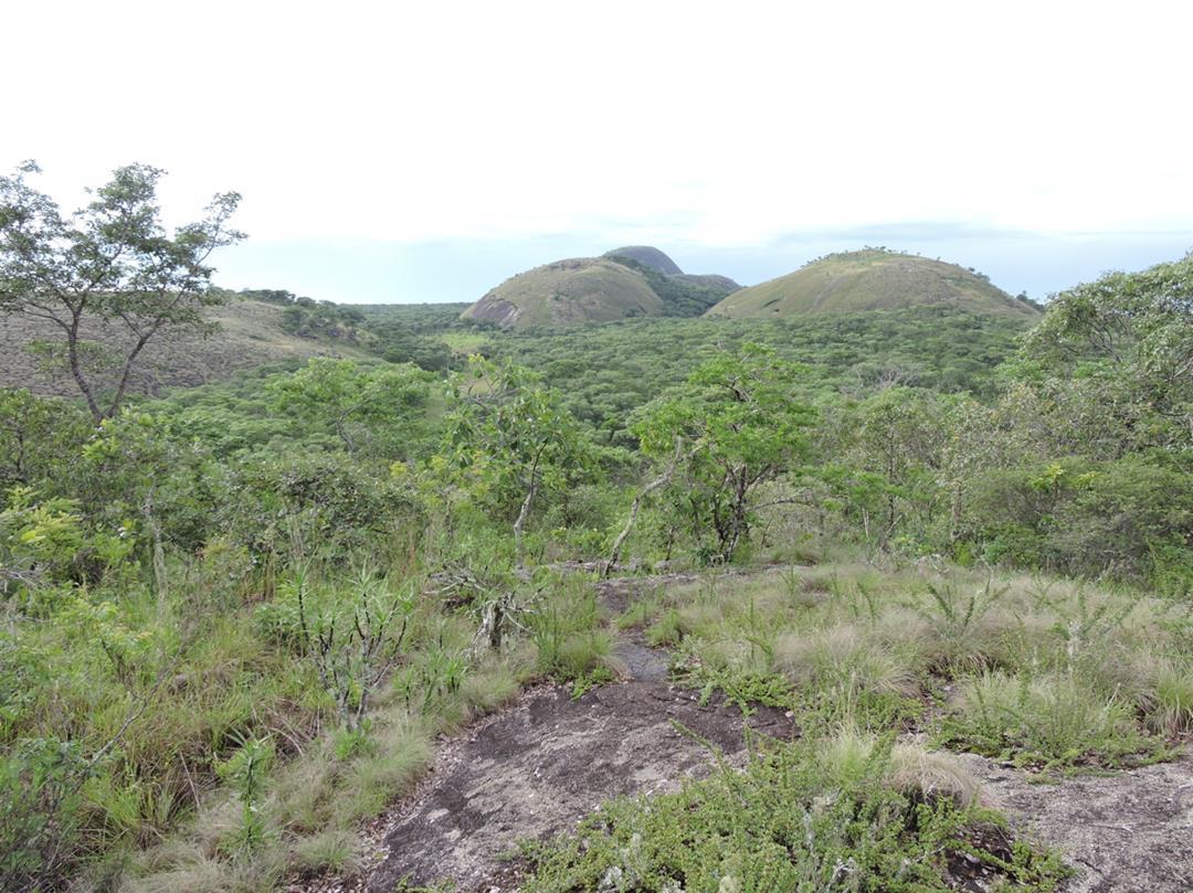 Mutinondo inselberg landscape. Habitat: Miombo woodland, inselbergs and rocky seepage slopes. Location: Mutinondo Wilderness Lodge, Mpika District, Muchinga Province