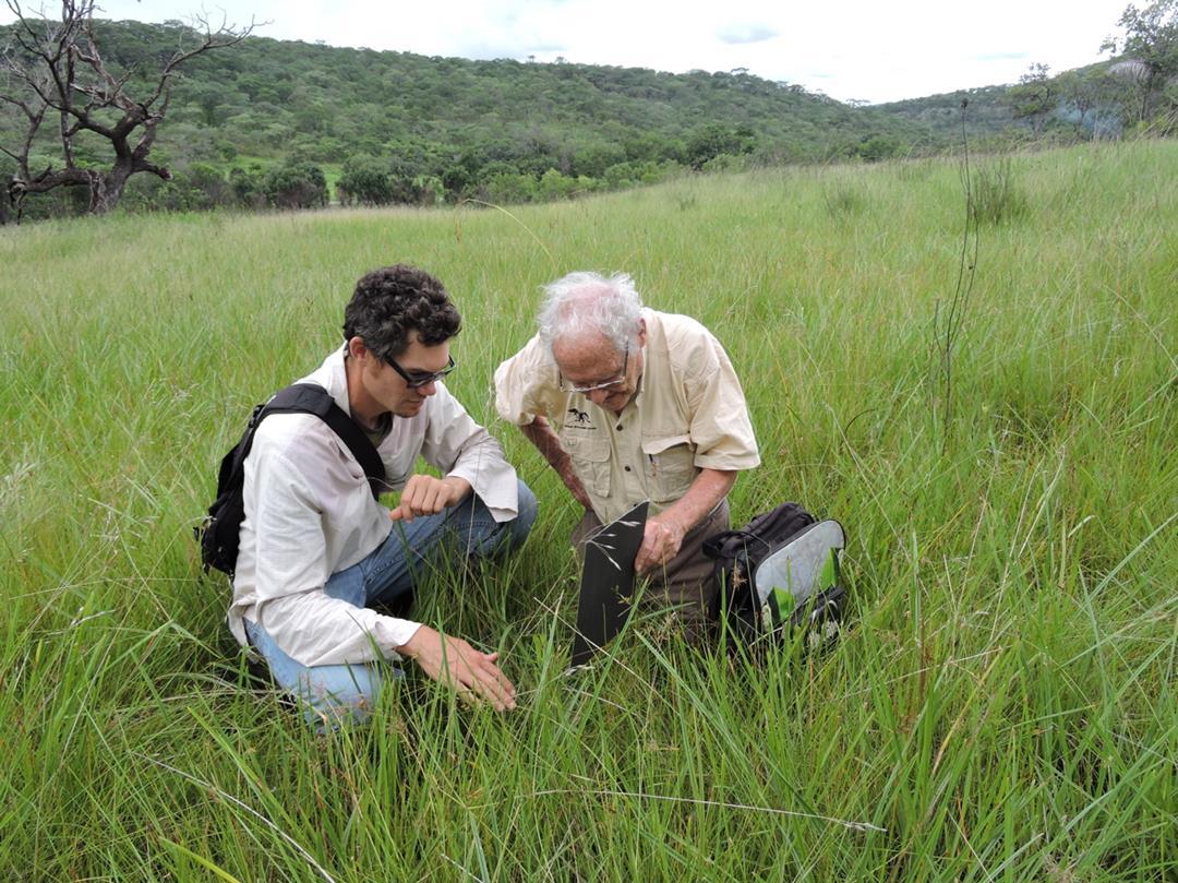 Nick and Mike at 80 mile dambo. Habitat: perennial wet dambo. Location: 80 mile dambo/Chakwenga Headwaters, Rufunsa District, Lusaka Province