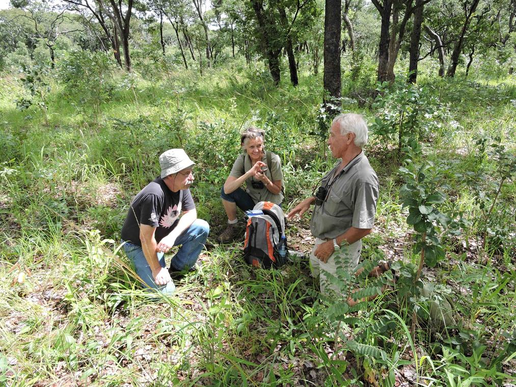 Benny, Sue and Dave in Mkushi farm block wooded area. Habitat: Miombo woodland. Location: Moffat Farm, Mkushi Farm Block, Mkushi District, Central Province.