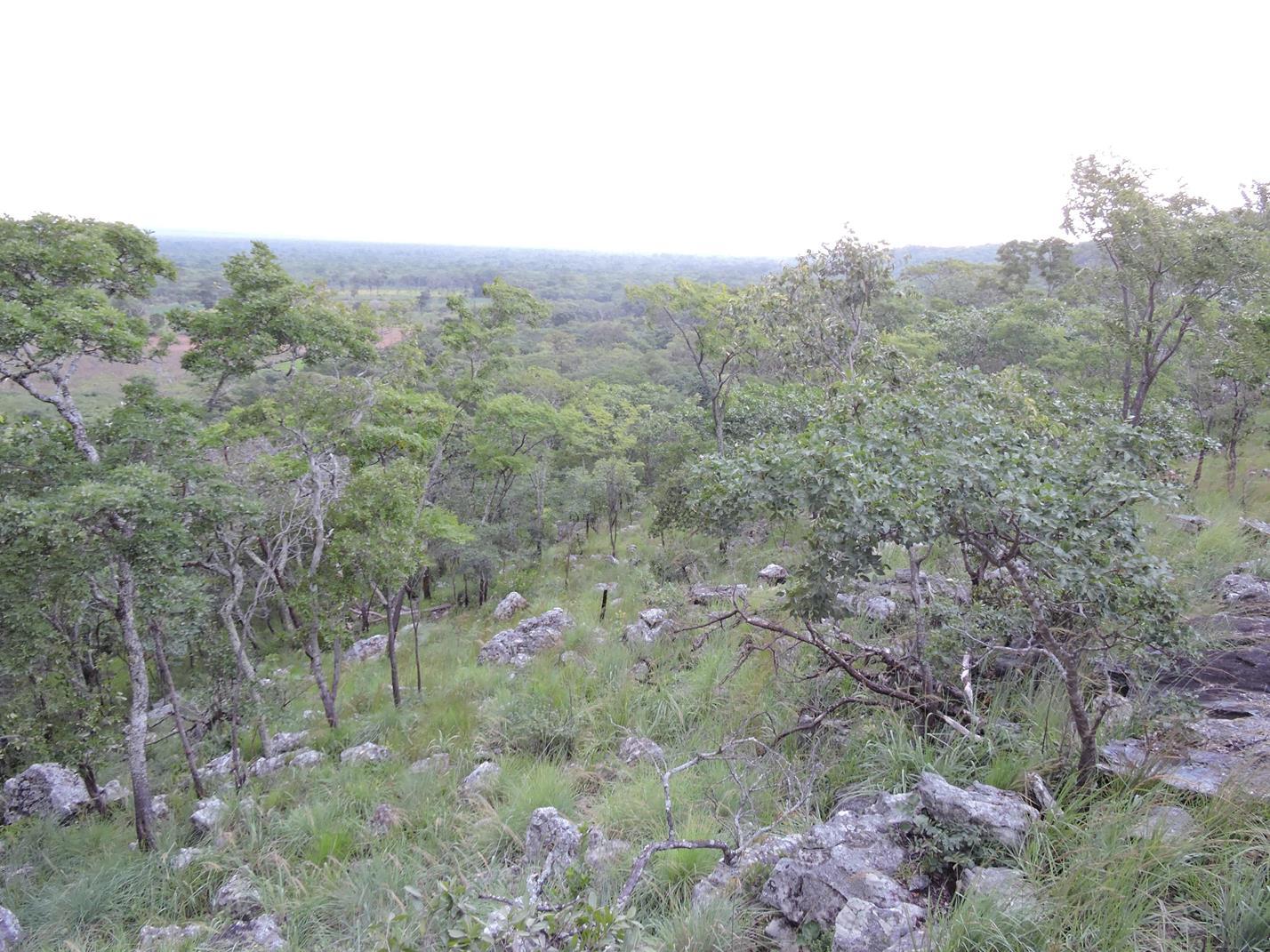 Namutoya wooded rocky hills. Habitat: Rocky miombo woodland. Location: Namutoya area, Serenje District, Central Province.