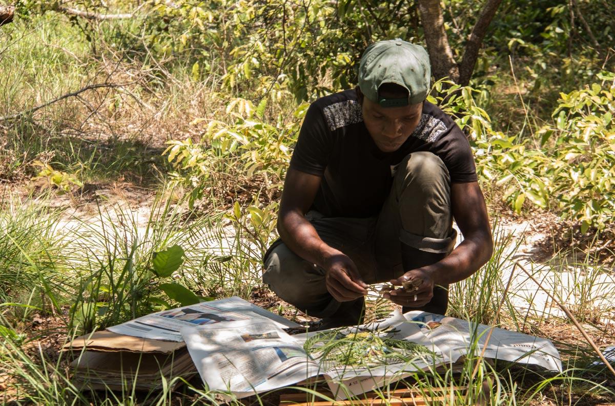 Edgar collecting Entada abyssinica