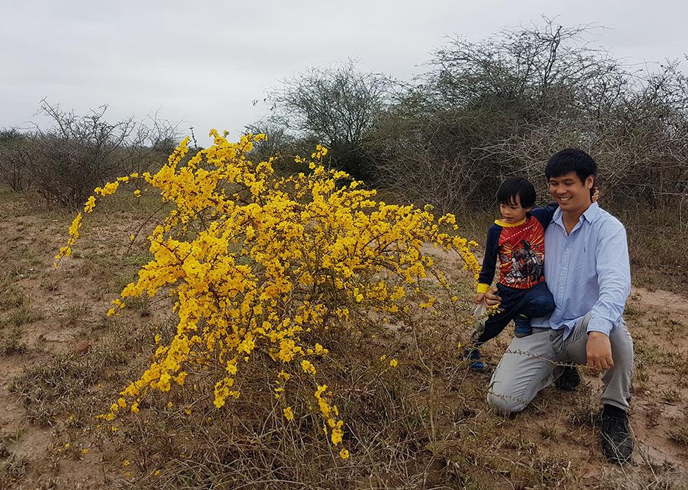 Arthit and his child admiring a profusely flowering specimen of Rhigozum zambesiacum.
