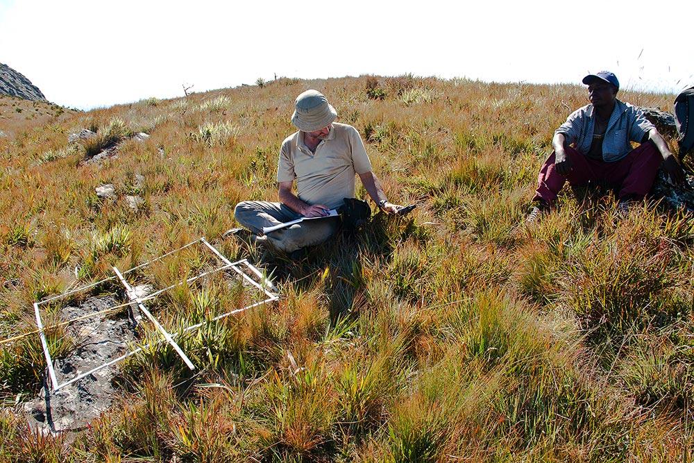 Plot sampling on Mt Pheza, Chimanimani Mts.